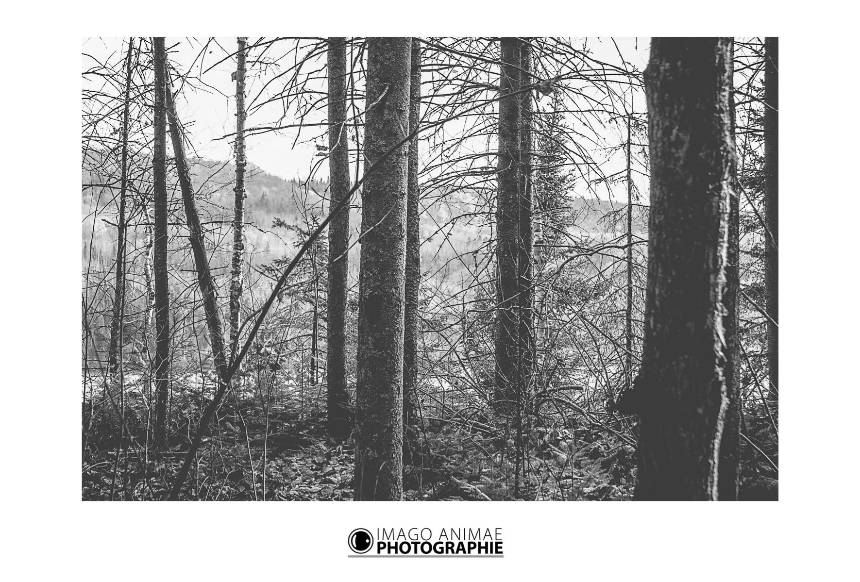 Christophe CAMPS - Imago Animae photographie - Voyage Canada Québec